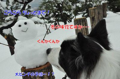20111217-dar04.jpg