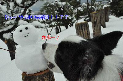 20111217-dar05.jpg