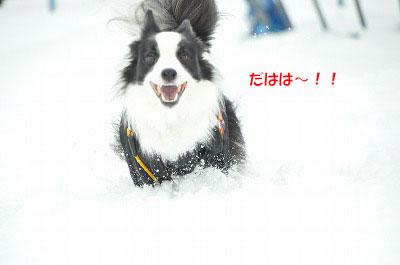 20111217-yuk08.jpg