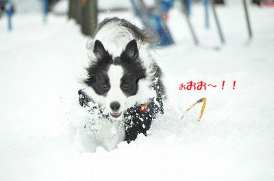 20111217-yuk09.jpg