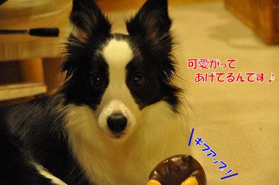 20111220-Bea06.jpg