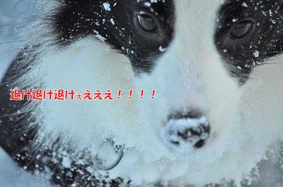 20120103-kur07.jpg