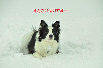 20120212-vin01.jpg