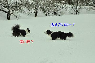 20120212-vin03.jpg