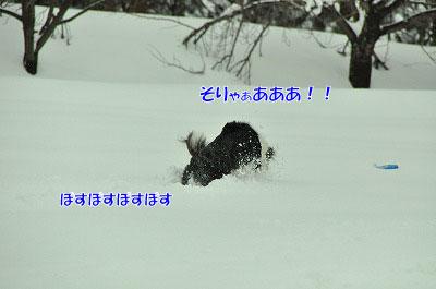 20120212-vin04.jpg