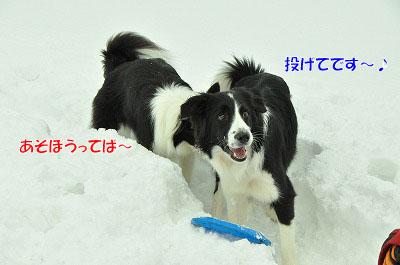 20120212-vin08.jpg