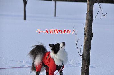 20120219-sou08.jpg