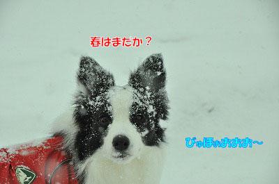 20120220-osya03.jpg