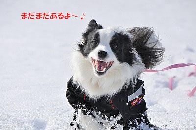 20120304-kai02.jpg
