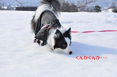20120304-kai05.jpg