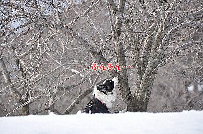 20120304-kai06.jpg
