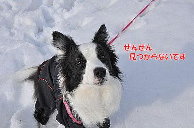 20120304-kai08.jpg