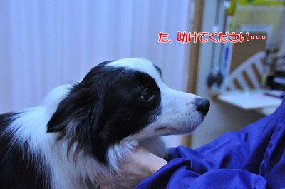 20120306-wak03.jpg