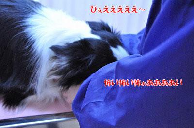 20120306-wak04.jpg