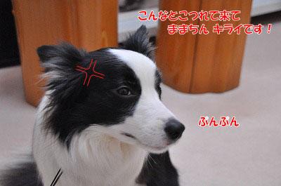 20120306-wak05.jpg
