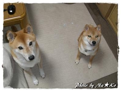 2010080902.jpg
