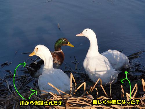 DSC05907.jpg