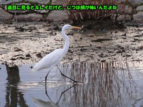 DSC06140.jpg