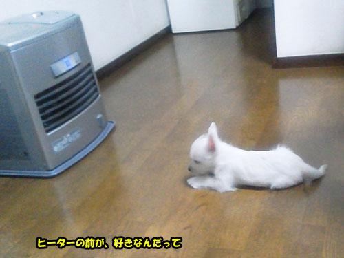 NEC_0567.jpg