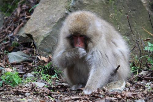 09野猿2