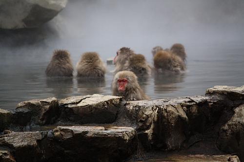 09野猿4-