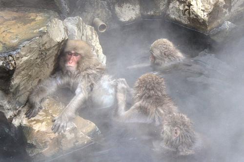 09野猿6