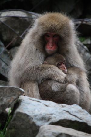 09野猿7