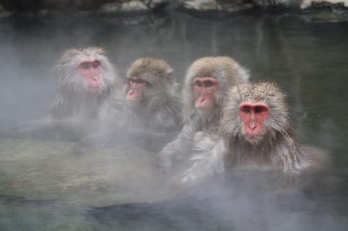 09野猿8