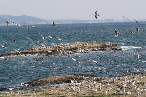 2010江ノ島9
