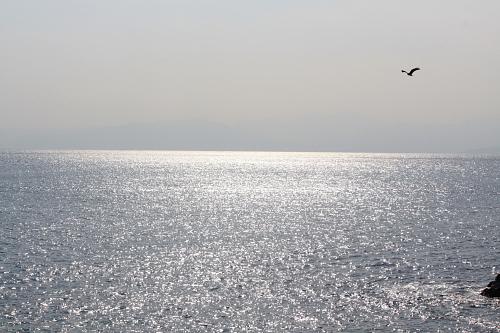 江ノ島50