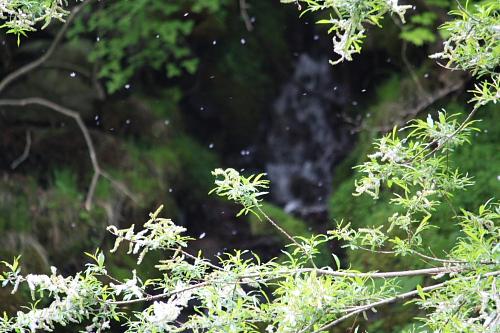 10吐龍の滝8