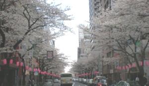 NAKANO-street3.jpg