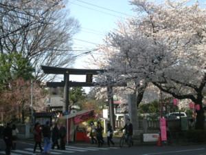 araiyakushi-sakura1.jpg