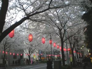 araiyakushi-sakura18.jpg
