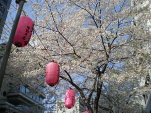 araiyakushi-sakura19.jpg