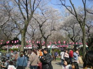 araiyakushi-sakura3.jpg