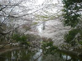 koenji-mabashi-park51.jpg