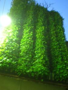 koenji-street133.jpg