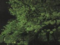 saginomiya-street13.jpg