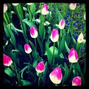 春爛漫-1