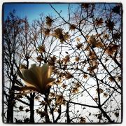 春爛漫-2