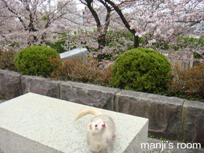お花見2010②