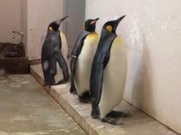 動物園にペンギンはよくいますが、ここはイルカもいるんですよ