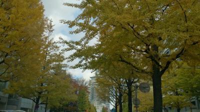 仙台上杉通りの銀杏並木