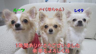 IMG_0657_20101230025657.jpg