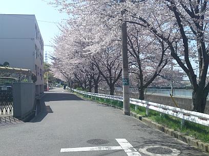 桜並木道 その2