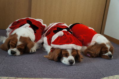 クリスマス 11