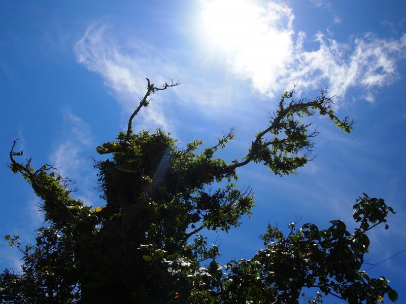 太陽まで伸びる気(木)です。