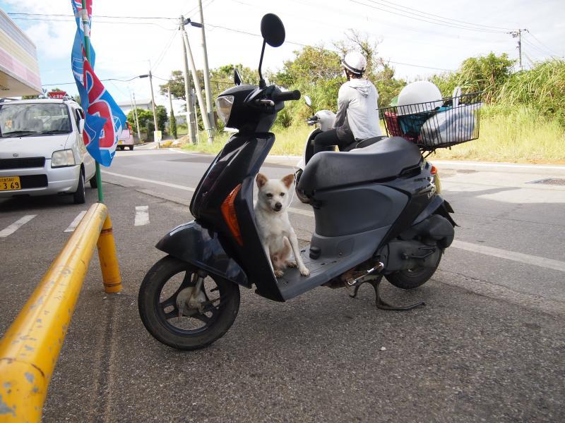 バイクわんこ