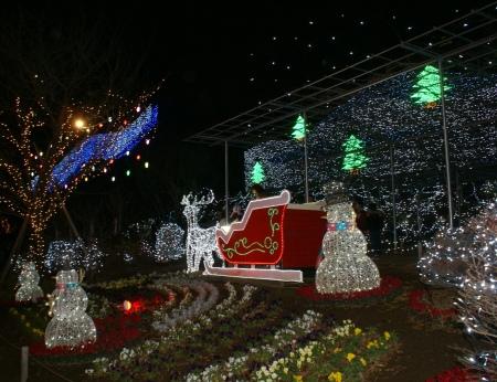12月5日あしかがフラワーパーク3
